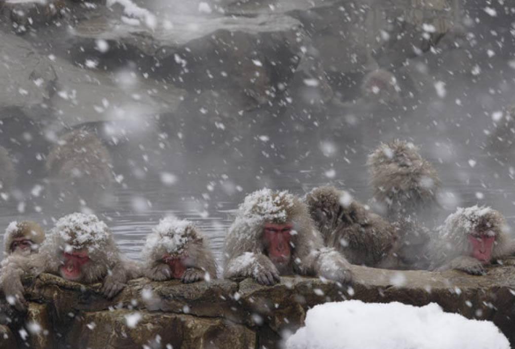 のざわ温泉交通スノーモンキーツアー